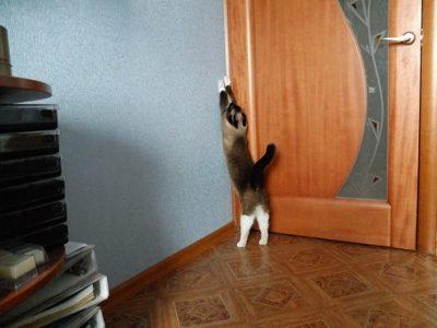 Повреждение двери домашними питомцами